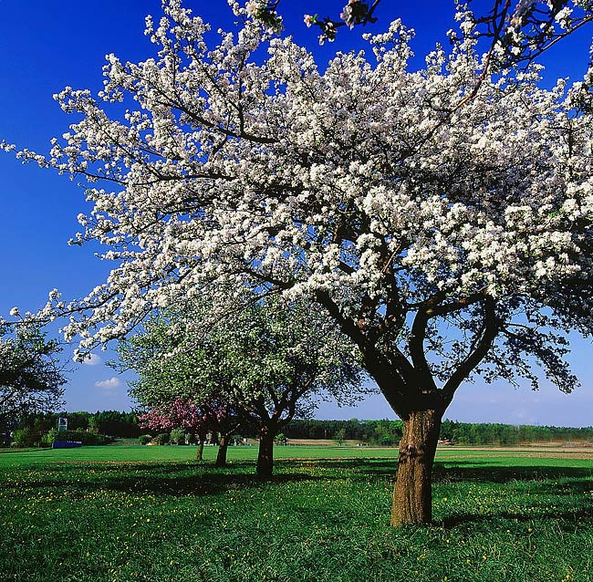 spring landscapes - photo gallery