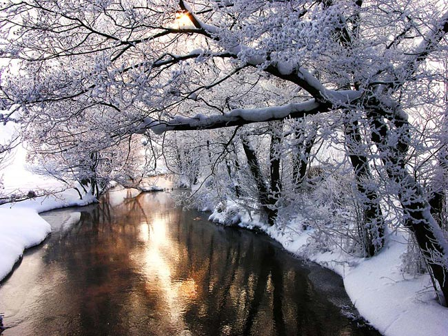 winter landscape  - picture