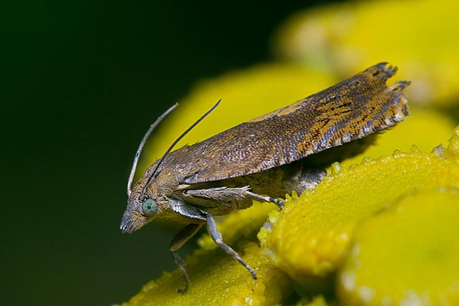 Insect - photos