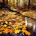 images - autumn landscapes
