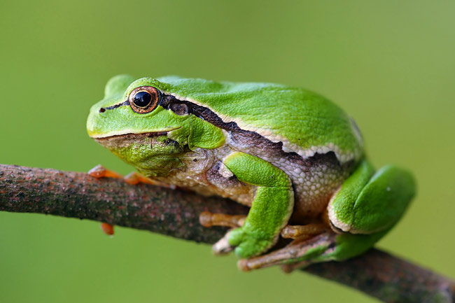 tree frog - nature photography