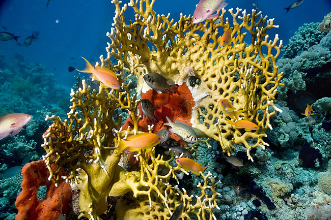 Coral reef - Red Sea - photos