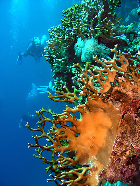 Photos - Coral reef - Red Sea