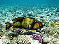Coral reef - Red Sea - nature photography