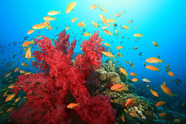 images - Coral reef - Red Sea