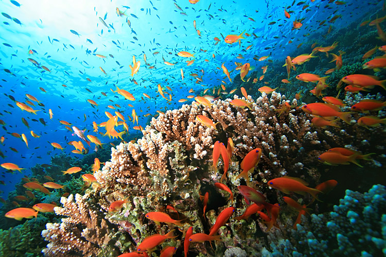 nature pictures - Coral reef - Red Sea