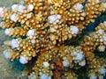 Corals - photo stock