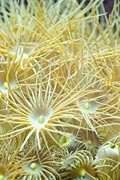 nature pictures - Corals