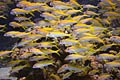 Coral reef - Fish - Swarm