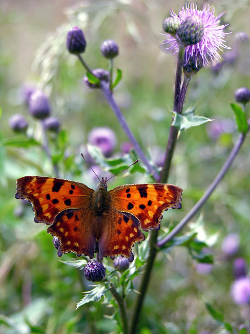 pictures - Comma
