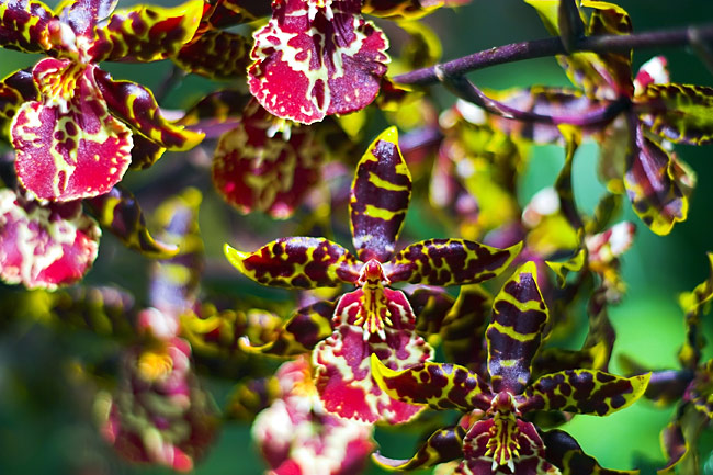 Photos - Orchids