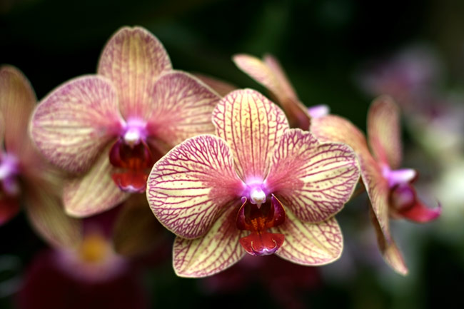pictures - Orchids