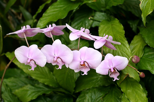 Orchids - picture