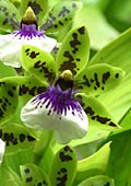 Orchids nature pictures