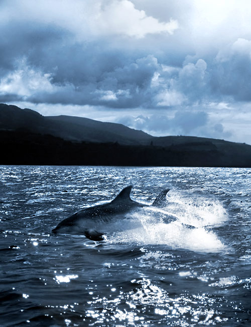 Common Bottlenose Dolphin - photography