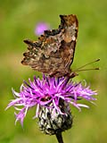 images - Comma
