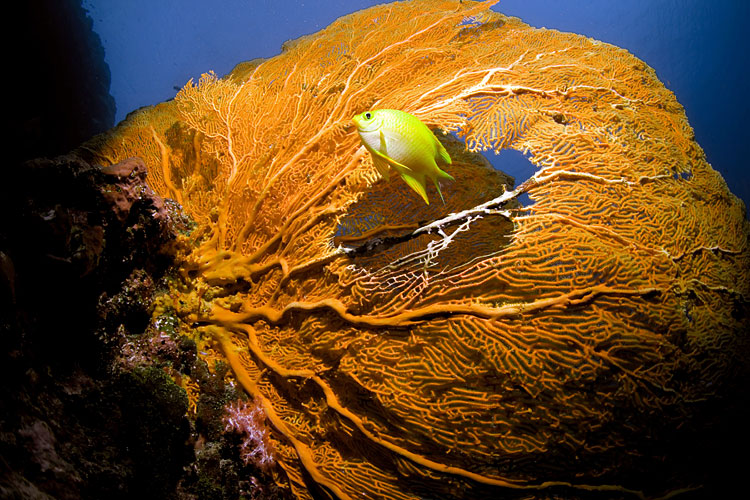 identification - Coral reef - Red Sea