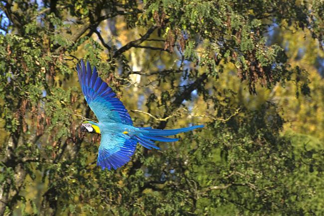 images - Macaws