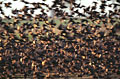 Starling - nature photography
