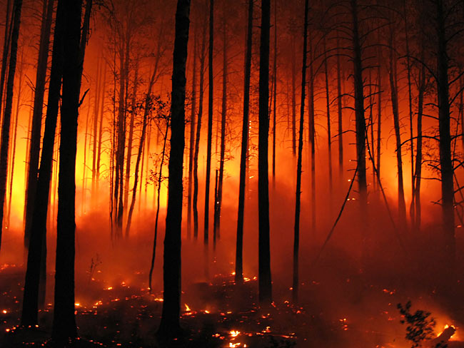 Natural disasters - forest fire photos