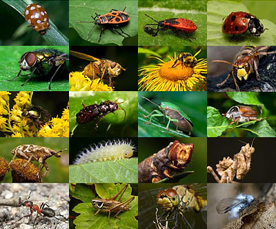 Beautiful Picture Nature on Insects   Macro Photography
